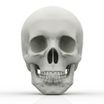 【速報】本庄市で発見された白骨死体...原因は詐欺グループの仲間割れか?