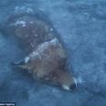 大寒波が襲う北欧の湖で冷凍化したキツネが発見される=スウェーデン