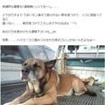 「愛犬を探しています」SNSで呼びかけた男性にまさかの動物虐待疑惑