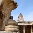 【UMA画像】インドで発見された奇跡の7頭キングコブラに地元住民は大パニック!?