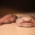 世界一醜い動物ブロブフィッシュの「不憫すぎる」調理光景