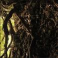 戦後60年、いまだ沖縄本島南部に残る「ガマの遺骨」