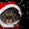 【ニコ生タックルズ】クリスマスは「幸せなイベントなのか」真剣に考えてみる